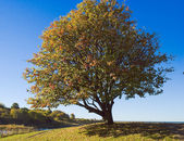 Lonely tree with blue sky — Stock Photo
