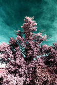 In the park autumn infra red — Stock Photo