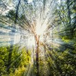 Sun rays in forest ,magic forest — Stock Photo