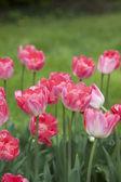 Coloridas flores en campo verde — Foto de Stock