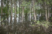 Green forest in the water — Stock Photo