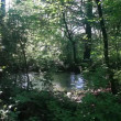 Stock Video: River in green forest