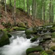 Stockfoto: Woodland Stream.