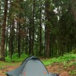 Tent nestled in early morning wilderness campsite.  XXL size. — Stock Photo