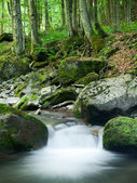 Rocky Forest Stream — Stock Photo