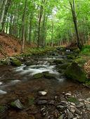 Woodland Stream. — Stock Photo