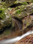 Pojedynczy strumień jesień i liści — Zdjęcie stockowe