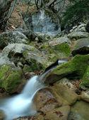 Fluxo, folhas e pedras — Fotografia Stock