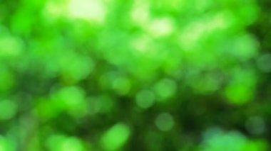 Blur green — Stock Video