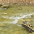 Stock Video: Beautiful mountain stream