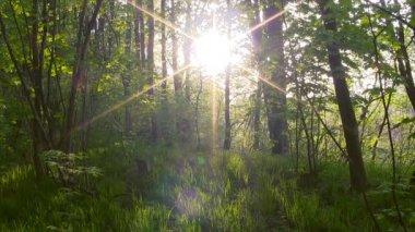 Forest sunset timelapse. — Stock Video
