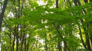 Spring leaves sliding — Stock Video