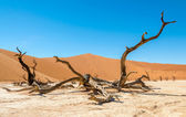 Dead Vlei — Stock Photo