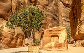 Altar in Petra — Stock Photo