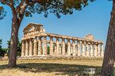 руины в городе paestum — Стоковое фото