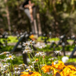 Flowers at Military Cemetery — Stock Photo #27286545