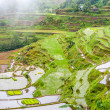 Terraced Fields — Stock Photo #27444649