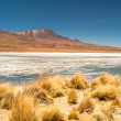 Stock Photo: Nature in Bolivia