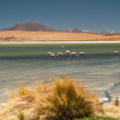 Laguna in Altiplano — Stock Photo