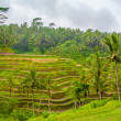 Terraced Fields — Stock Photo #27973743