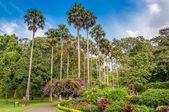 Botanical Garden in Kandy — Stock Photo
