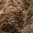 Surface of weathered wood plank — Stock Photo