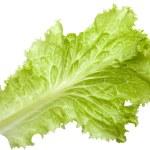 Постер, плакат: Leaf lettuce