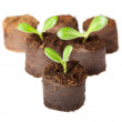 Little sprouts — Stock Photo