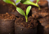Fresh watered seedlings — Stock Photo