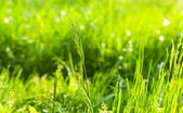 Summertime lawn — Stock Photo