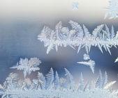 Frozen ornament — Stock Photo