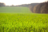 Farmland background, focus on front rows grass — Stock Photo