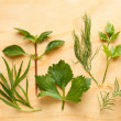 Dill, tarragon, mint, cilantro, parsley and rosemary composition — Stockfoto