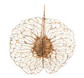 Strange seed ornament — Stock Photo