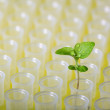 New plant in laboratory tube  — Stock Photo