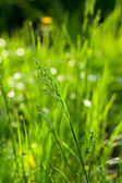 Green grass at summer time — Stock Photo