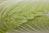 Hojas de col verde — Foto de Stock