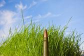 Картридж против трава и голубое небо — Стоковое фото