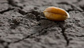 One grain on eroded land — Stock Photo