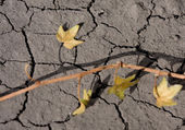 Parched ivy on dry ground — Stock Photo