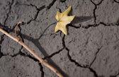 Trockene blatt am trockenen land — Stockfoto