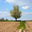 Stock Photo: Rural path on tillage field