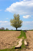 Rural path on the tillage field — Stock Photo