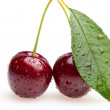 Bunch of two Cherries and leaf — Photo