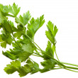 Twig of fresh parsley — Stock Photo