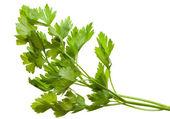 Twig of fresh parsley — Stock Photo