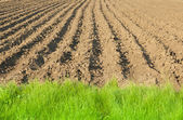 Plowed land edge — Stock Photo