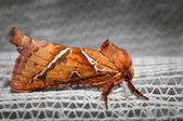 Moth on white background — ストック写真