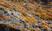 Lichen and stone — Stock Photo
