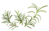 Rosemary twigs — Stock Photo